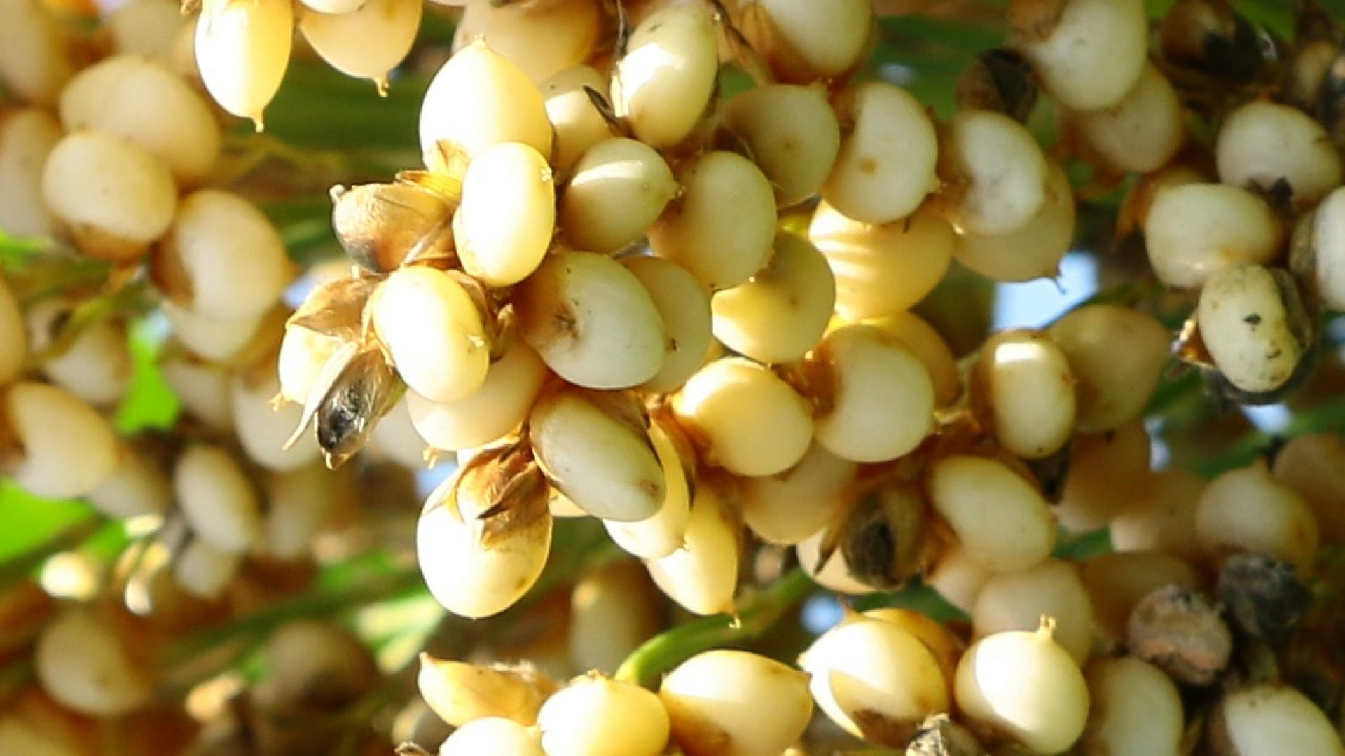 Carolina Seed Systems